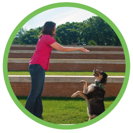 St Louis MO Dog Training and Dog Training Classes