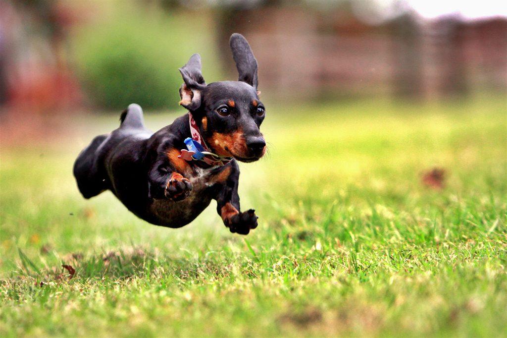 hyperactive dog